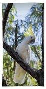 Sulphur Crested Cockatoo Bath Towel