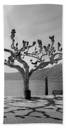 sycamore trees in Ascona - Ticino Bath Towel