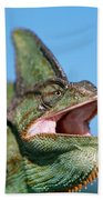 Veiled Chameleon Chamaeleo Calyptratus Bath Towel