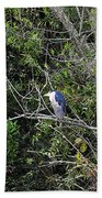 Yellow-crowned Night-heron Bath Towel