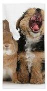 Yorkshire Terrier Pup With Rabbit Hand Towel