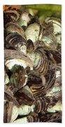 Zebra Mussels Dreissena Polymorpha Bath Towel