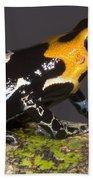 Crowned Poison Frog Bath Towel