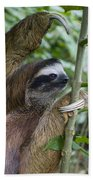 Brown-throated Three-toed Sloth Bath Towel
