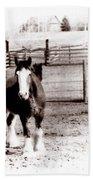 1900  Clydesdale Horse Bath Towel