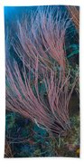 A Colony Of Red Whip Fan Corals Bath Towel