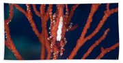 Bright Red Crab On Fan Coral, Papua New Bath Towel