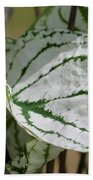 Caladium Named White Christmas Bath Towel