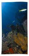 Coral And Sponge Reef, Belize Bath Towel