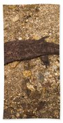 Japanese Giant Salamander Bath Towel