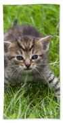 Small Kitten In The Grass Bath Towel