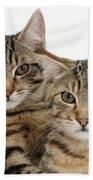 Tabby Kittens Bath Towel