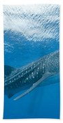 Whale Shark, Ari And Male Atoll Bath Towel