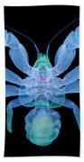 X-ray Of Coconut Crab Bath Towel