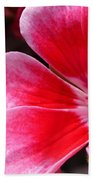 Zonal Geranium Named Candy Fantasy Kiss Bath Towel