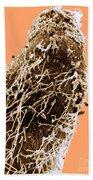 Bacteria On Sorghum Root Tip Bath Towel