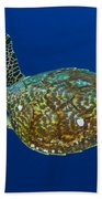 Hawksbill Sea Turtle, Kimbe Bay, Papua Bath Towel