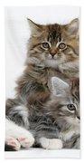 Maine Coon Kittens Bath Towel