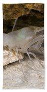 Mclanes Cave Crayfish Bath Towel