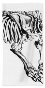 Megatherium, Extinct Ground Sloth Hand Towel