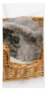 Mother Cat With Kitten Bath Towel