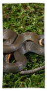 Northern Ringneck Snake Bath Towel