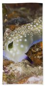 Nudibranch Feeding On Algae, Papua New Bath Towel