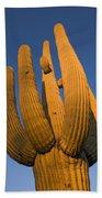 Saguaro Carnegiea Gigantea Cactus Bath Towel
