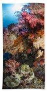 Soft Coral In Raja Ampat, Indonesia Bath Towel