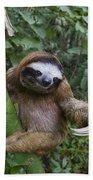 Brown-throated Three-toed Sloth Hand Towel