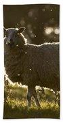 The Lamb  Bath Towel