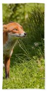 A British Red Fox Bath Towel