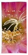 Dark Pink Cactus Flower Bath Towel