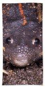 Mexican Burrowing Toad Bath Towel