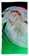 Water Flea Daphnia Magna Bath Towel