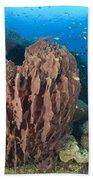 A Barrel Sponge Attached To A Reef Bath Towel