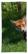 A British Red Fox Bath Towel