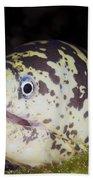 A Chain Moray Eel Peers Out Of Its Hole Bath Towel