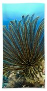 A Feather Star With Arms Extended Bath Towel