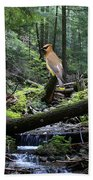 A Giant Cedar Waxwing On Mt Spokane Bath Towel