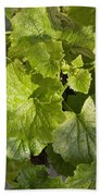 A Green Leafy Vegetable Plant After Watering In Bright Sunrise Bath Towel