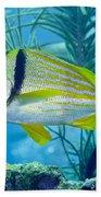 A Porkfish Swims By Sea Plumes Bath Towel