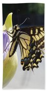 A Swallowtail Butterfly Bath Towel