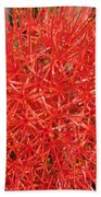 African Blood Lily Or Fireball Lily Bath Towel