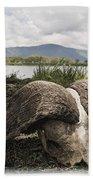 African Cape Buffalo Skull, Ngorongoro Bath Towel
