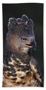 African Crowned Eagle Bath Towel