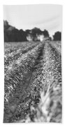 Agriculture- Corn 2 Bath Towel