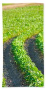 Agriculture- Soybeans 3 Bath Towel