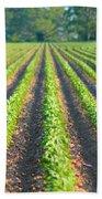 Agriculture-soybeans 5 Bath Towel