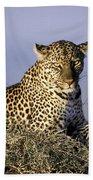 Alert Female Leopard Bath Towel